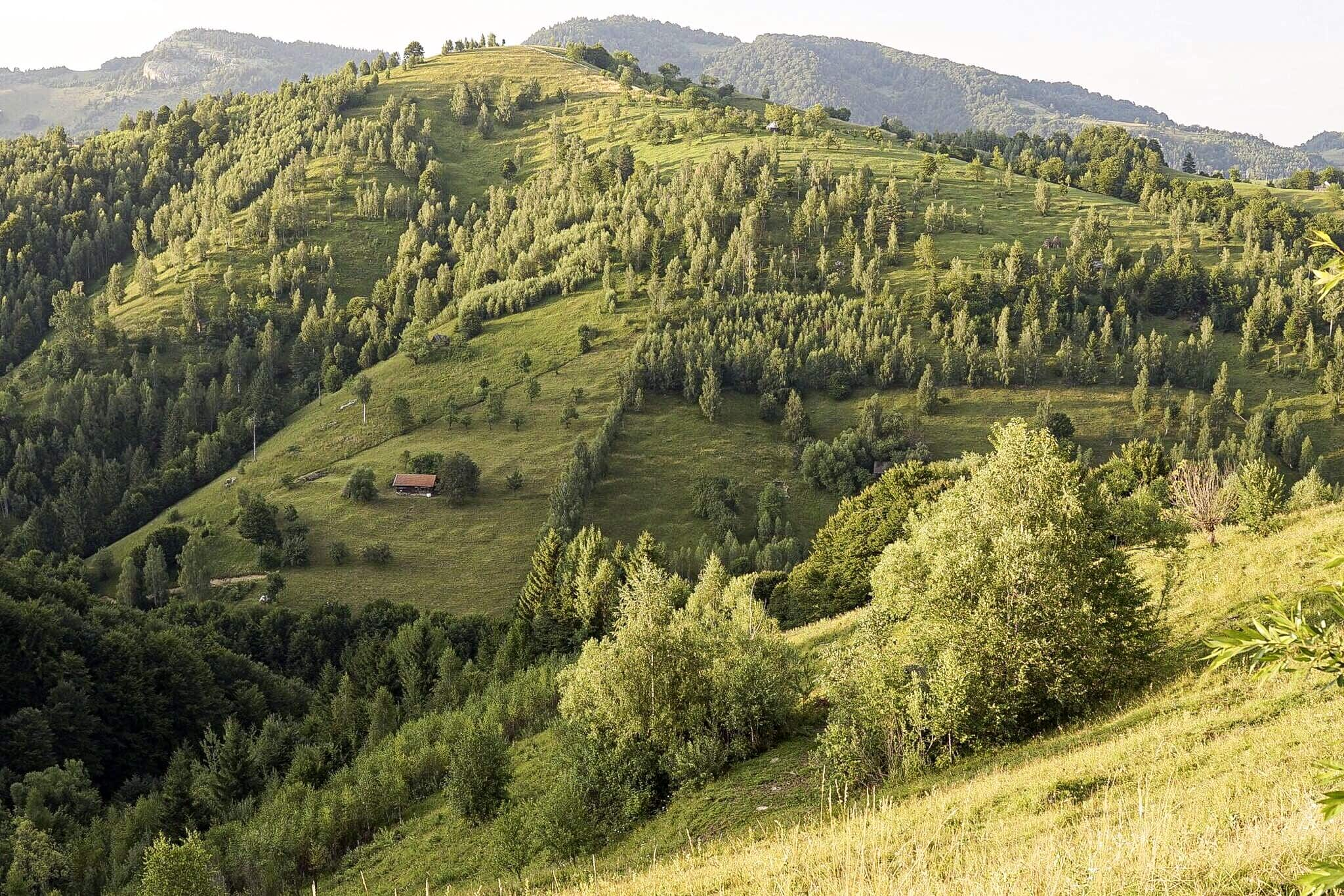 Read more about the article Transylvania (Nature)